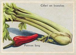 Image_celeri