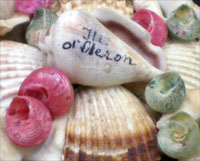 Coquillages_creation_boite_ronde_ouverte_oleron_blog