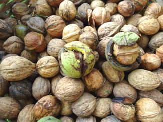 Le blogue jardin belle r colte de noix - Comment conserver des carottes du jardin ...