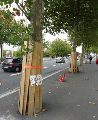 Arbre_protection_chantier