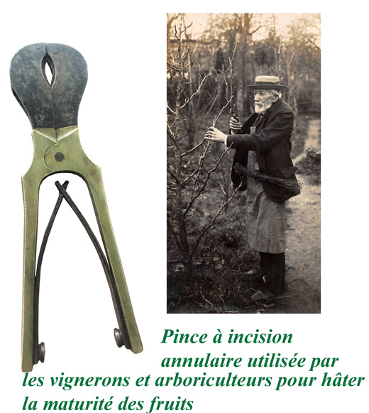 Pince-incision-annulaire-outil