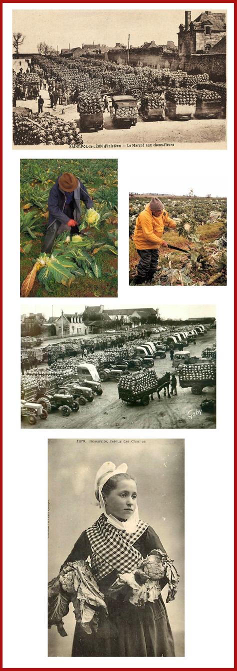 Economie-bretonne-du-chou-fleur