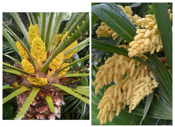Palmiers-fleurs